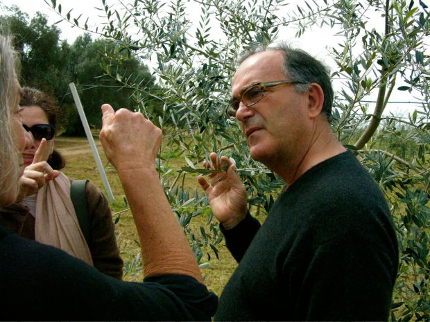 olivegrower